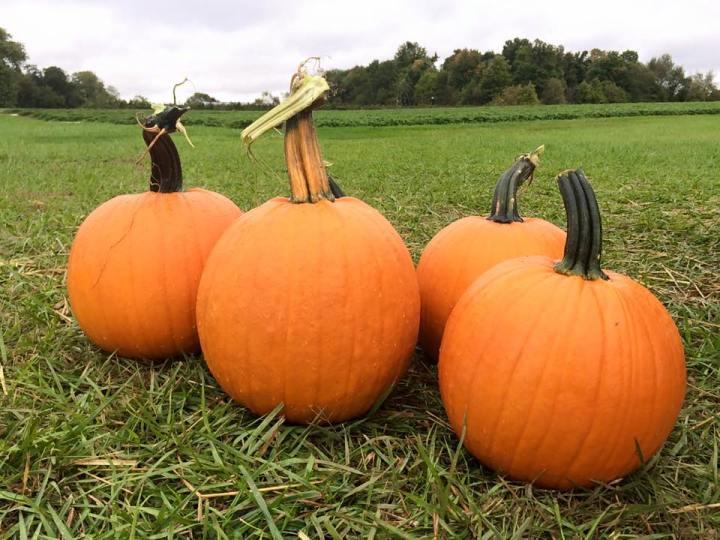 Spencer Farm Pumpkins