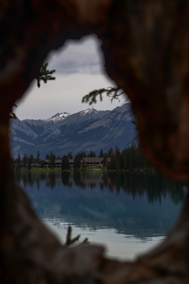 Lac Beauvert, Pictured Through a Tree
