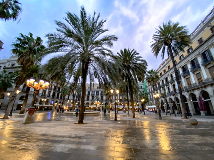 Barcelona Palm Trees